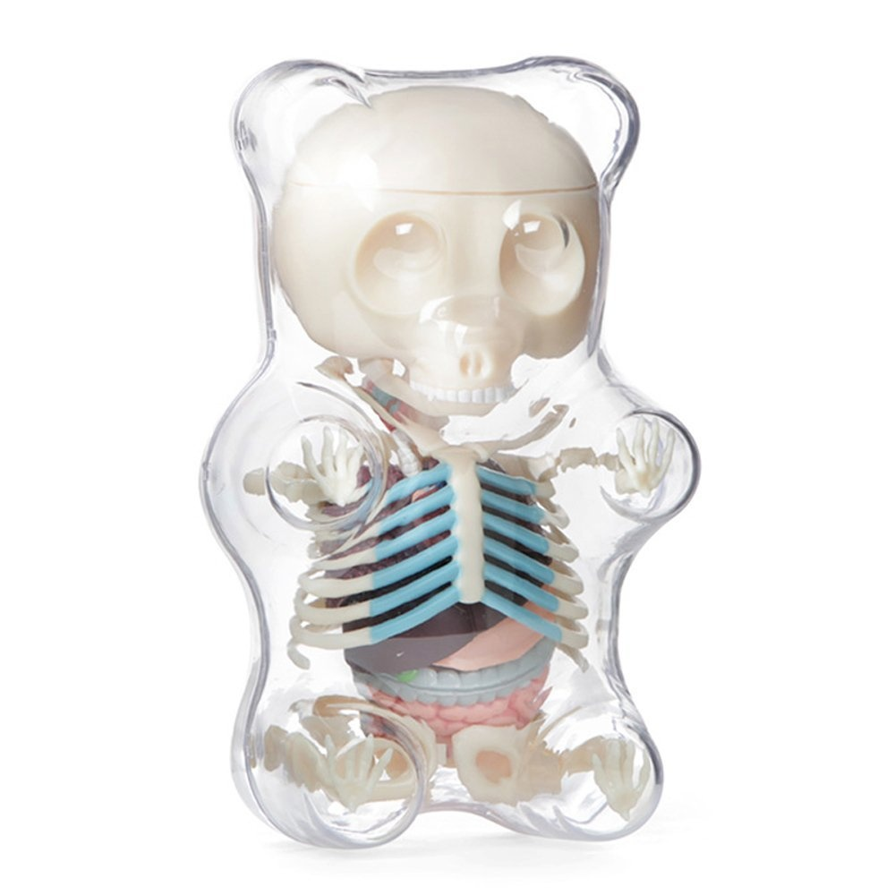 4D Vision Animal Anatomy - Gummi Bear Skeleton Anatomy Model Kit ...