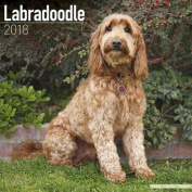Labradoodle Calendar 2018