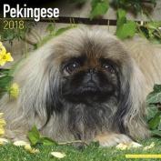 Pekingese Calendar 2018