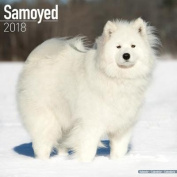 Samoyed Calendar 2018