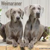 Weimaraner Calendar 2018