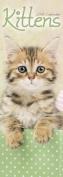 Kittens Slim Calendar 2018