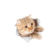 Lalang 3D Cute Kitten Dog Wall Sticker Nursery Kids Bedroom Deocration Cartoon Fridge Sticker