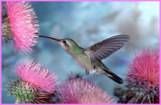 Hummingbird & Pink Powderpuff Flowers - Etched Vinyl Stained Glass Film, Static Cling Window Decal