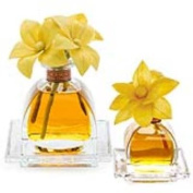 BITTER ORANGE Agraria Flower Diffuser Combo - AirEssence and PetiteEssence