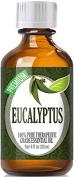 Best Eucalyptus Oil - 100% Pure Eucalyptus Essential Oil - 120ml