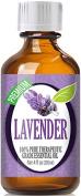 Best Lavender Oil - 100% Pure Lavender Essential Oil - 120ml