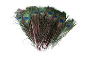 WAKEACE 100pieces Wholesale 25-30cm 10-12 Inch Beautiful Natural Peacock Feathers Eyes for DIY Clothes Decoration Wedding Party