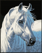 Dorara DIY Oil Painting Paint By Number Hand Paintworks 16×50cm White horse