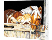 Dorara DIY Oil Painting Paint By Number Hand Paintworks 16×50cm stable pals