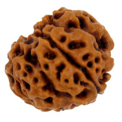 Be You Brown Colour 4 Mukhi Round Shape Lab Certified Natural Nepal Rudraksha