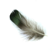 WAKEACE 50Pieces Beautiful Natural Green Pheasant Feathers for Crafts DIY Handmake Arts Material Accessories