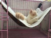 YunNaSi Cat Kitten Hanging Hammock Bed Pet Cat Cage Pad