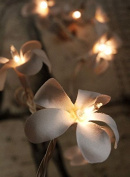 Solar Power Outdoor Garden Flower Frangipani 20 Led Fairy Lights Weather Proof Party White