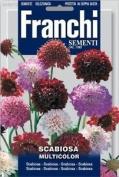 Franchi Scabiosa Flower