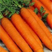 Carrot - Resistafly F1 - 1200 Finest Seeds