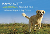 Magno Mutt - Advanced Magnetic Dog Collar - Persian Blue - Large 19- 25½ Inches