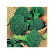 Premier Seeds Direct Org-05 Broccoli Green Organic Sprouting Calabrese Seeds,