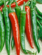 Premier Seeds Direct Pepper Hot Scorpion F1 Includes 25 Seeds