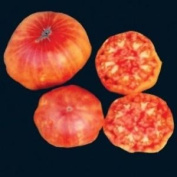 Premier Seeds Direct Tomato Flame Includes 100 Seeds