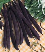 Premier Seeds Direct Dwarf French Bean Purple Queen Includes 150 Italian Seeds
