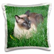 3dRose Siamese Cat, Pillow Case, 41cm by 41cm
