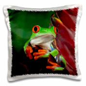 3dRose Red-Eyed Tree Frog (Agalychnis callidryas) - NA02 AJE0387 - Adam Jones, Pillow Case, 41cm by 41cm