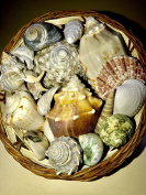 Basket of Seashells from THE OTHER TIDE