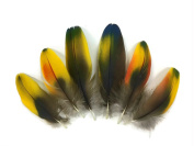 Macaw Feathers | 4 Pieces - Yellow and Green Iridescent Scarlet Macaw Body Plumage Feathers