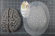 Human Brain (Mega) Plastic Mould Resin Mould, brain Mould, clay mould, soap mould, wax mould, anatomy mould, human mould, bath bomb mould