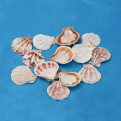 Kissitty 500 Grammes Dyed Beach Sea Shell Beads with Holes 39~45mm Length For DIY Jewellery Making Art Craft Projects-Bag of Approx. 90pcs