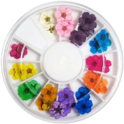 CHIC*MALL Colourful Dried Flowers Nail Art Accessories Nail Sticker Decoration