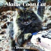2019 Maine Coon Cat Wall Calendar
