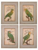Parrot And Palm Iiiiiiiv - Fine Art Giclee Under Glass