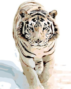 Arts Language Wooden Framed 41cm x 50cm Paint by Numbers Diy Painting -Snow Tiger