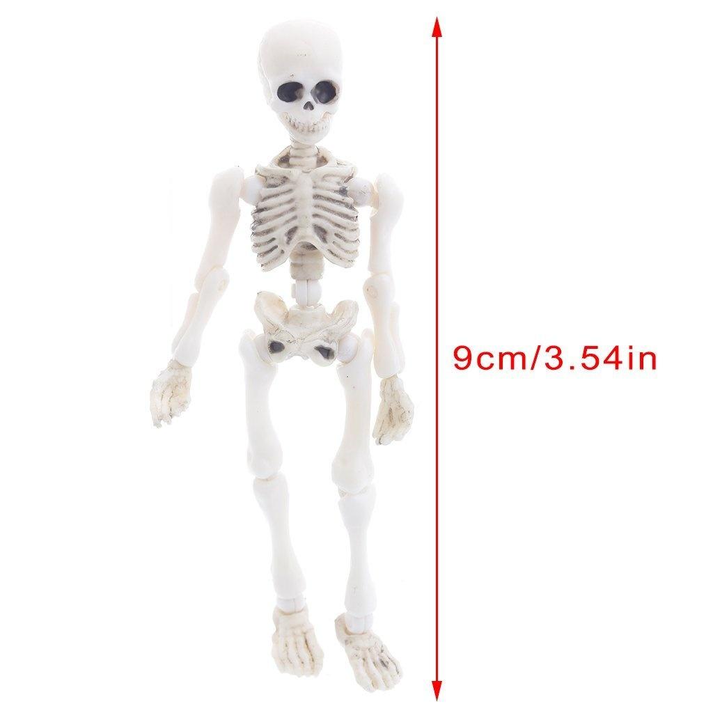 Homyl Female Anatomy Figure Superficial Muscle Anatomy Model Lab
