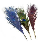 Peacock Feather Quill Pen