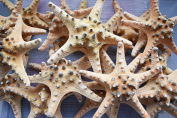 12 Extra Large Knobby Starfish 18cm - 20cm dried Beach Wedding Crafts Decor Sea Star Cute Nautical Coastal