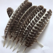 Turkey Feathers 10 Pieces/PCS Discount Wholesale Discount Wholesale DIY Decoration Collection Purification Energy Feathers