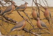Greenhead Gear Mourning Doves,1/2 Dozen