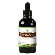 Goldenseal Leaf Alcohol Liquid Extract, Organic Goldenseal Leaf (Hydrastis canadensis) Dried Leaf Tincture Supplement