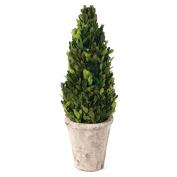 Skalny Indoor Preserved Boxwood Cone Topiary, 13cm x 41cm