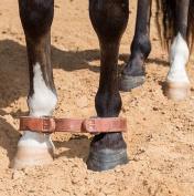 STT Leather Horse Hobble