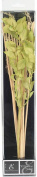 Hosley 32cm High Botanical Diffuser Reeds - Green/Natural. Ideal Gift for weddings, House warming, Home office, Meditation, Reiki settings.