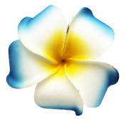 Tropical Flower Light Blue and White Hair Clip With Yellow Centre