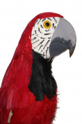 Rex the Flying 80cm Macaw Parrot.