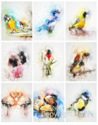 Watercolour Birds Collage Sheet for Arts, Crafts, Decoupage or Scrapbooking