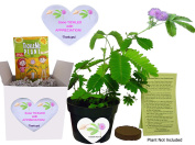 Fun Alternative to a THANK YOU Card. So Tickled With APPRECIATION TickleMe Plant Gift Box - Grow the House Plant that Closes Its leaves and lowers ts branches when you TICKLE it and everyone SMILES!