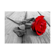 Fineser(TM) 5D Embroidery Paintings Rhinestone Pasted DIY Diamond painting Cross Stitch Red Rose C