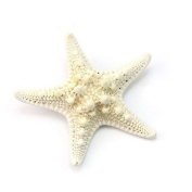Vellhater 5pcs Fashion Starfish Shape Hairpin for Women and Girls
